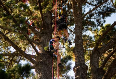 Escapades Branchées grimpe arbres nantes